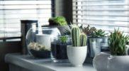 Keramzyt w doniczce, czyli czego jeszcze nie wiedziałeś o uprawie roślin?